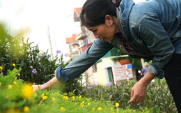"""Phụ nữ Phù Đổng khiến đoạn đường đê nhiều đá sỏi """"nở hoa"""" để chào mừng đại hội đảng bộ các cấp"""