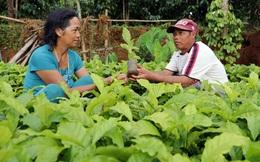 Nguồn vốn ưu đãi từ NHCSXH tỉnh Đắk Nông tiếp sức làm giàu