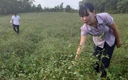 Vợ chồng trẻ biến vùng đất đồi khô cằn thành vườn dược liệu