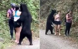 Dân Mexico tức tối vì gấu đen bị thiến sau khi đến gần du khách