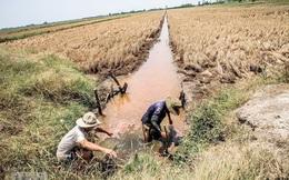 Agribank hỗ trợ khách hàng bị ảnh hưởng bởi hạn hán, xâm nhập mặn