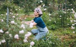 Gieo trồng ước mơ trong trang trại hoa hồng