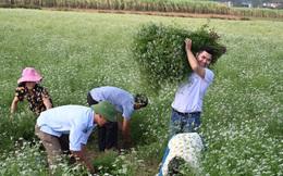 Quyết tâm thoát nghèo từ nông nghiệp, chàng sinh viên 7 lần khởi nghiệp thất bại nhận được cái kết có hậu