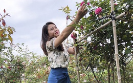 Ứng dụng công nghệ 4.0 vào mô hình trang trại dâu tây và hoa hồng