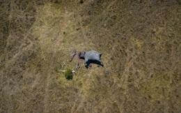 Tăng cường sự nêu gương của cán bộ, đảng viên trong việc bảo vệ động vật hoang dã