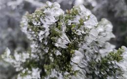 Trời rét đậm, rét hại, Mẫu Sơn -1,5 độ C xuất hiện băng giá ngày càng dày