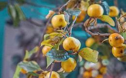 """Tràn ngập các loại """"hoa"""" từ cành quả mừng ngày Phụ nữ Việt Nam 20/10"""