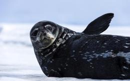 Những loài vật chịu được lạnh khủng khiếp nhất hành tinh