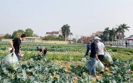 Còn nhiều khó khăn khi tiêu thụ nông sản cho vùng dịch