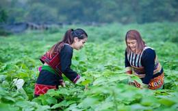 Đồng hành nâng cao quyền năng kinh tế cho phụ nữ dân tộc thiểu số
