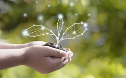 Bạn có thể làm gì để hưởng ứng Giờ Trái đất 2021?