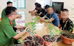 Công an tỉnh Hưng Yên cảnh báo lừa đảo mua bán lan đột biến