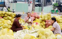 Bỏ công cắt gọt, rao bán 8 tấn bắp cải ở trung tâm Sài Gòn