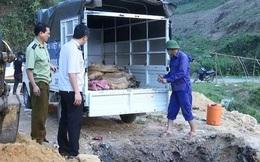 Phát hiện xe tải chở nửa tấn cá tầm nhập lậu từ Trung Quốc