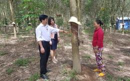 Agribank Kon Tum - Hiệu quả sau 5 năm triển khai cho vay thông qua tổ, nhóm