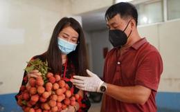 Anh nông dân chở 1 tấn vải Bắc Giang đã kiểm dịch xuống Hà Nội bán