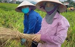 Phụ nữ Bắc Giang chung tay hỗ trợ người dân thu hoạch nông sản