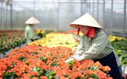 TPHCM: Chợ hoa Đầm Sen mở cửa 3 ngày giúp hỗ trợ tiêu thụ hoa Đà Lạt