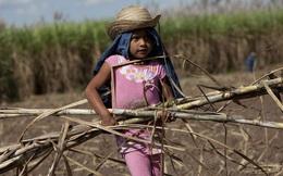 Lần đầu tiên trong 2 thập kỷ, lao động trẻ em tăng lên 160 triệu