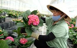 Sở Công thương TPHCM nói gì về việc chợ hoa Đầm Sen hoạt động trong 3 ngày?