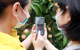 6 sàn thương mại điện tử cùng vào cuộc thúc đẩy tiêu thụ vải Bắc Giang