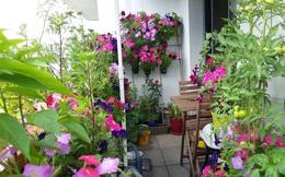 Ở nhà làm việc trực tuyến, anh không còn cau có với không gian ngập hoa chật chội ở ban công