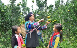 Cần cụ thể hóa các tiêu chí để bảo đảm vai trò phụ nữ xây dựng nông thôn mới