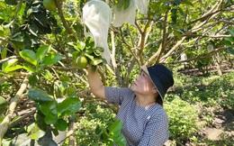 Hỗ trợ phụ nữ dân tộc thiểu số ở Quảng Ngãi làm kinh tế, thoát nghèo