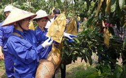 Sơn La: Dấu ấn trong hỗ trợ phụ nữ phát triển kinh tế