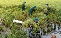 Nghệ An: Bộ đội hỗ trợ người dân gặt lúa chạy mưa lũ
