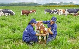 Vinamilk ra thông cáo chính thức về nguồn nguyên liệu để sản xuất các sản phẩm sữa