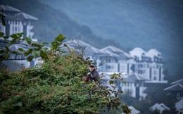 Phát triển du lịch cũng là phương cách để bảo vệ môi trường