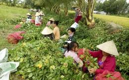 Phụ nữ nông thôn vùng đồng bằng sông Cửu Long đối mặt với thách thức từ Cách mạng công nghiệp 4.0