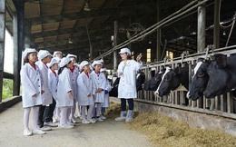 1 ngày trải nghiệm vui vẻ của các em nhỏ tại Trang trại bò sữa Organic TH