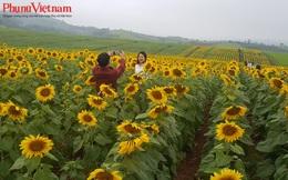 Bỏ túi 4 lưu ý khi check-in cánh đồng hoa hướng dương lớn nhất Việt Nam