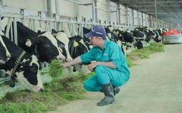 """Tết tại """"resort"""" bò sữa Vinamilk có gì đặc biệt?"""