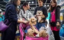 Không lập gia đình và sinh con, người Trung Quốc đổ tiền cho thú cưng