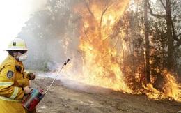 Cháy rừng gây thiệt hại kinh tế 20 tỷ AUD cho Australia
