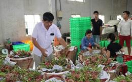 Xuất khẩu nông sản gặp khó do virus Corona, hàng ngàn gia đình nông dân bị ảnh hưởng
