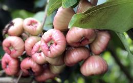 Nguồn dinh dưỡng dồi dào cùng những lợi ích tuyệt vời của quả roi