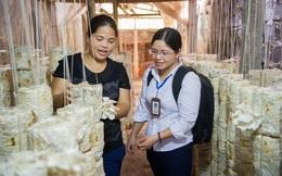 TYM: Gần 3.500 tỷ đồng cho phụ nữ vay vốn, phát triển kinh tế gia đình