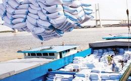 Thủ tướng chỉ đạo tạm dừng ký mới hợp đồng xuất khẩu gạo