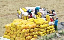 Thủ tướng yêu cầu Bộ Công Thương khẩn trương tháo gỡ khó khăn xuất khẩu gạo