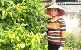 Người phụ nữ hiến ruộng mở đường Nông thôn mới