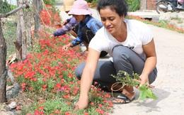 Ngỡ ngàng trước các cung đường hoa muôn sắc ở Quảng Bình