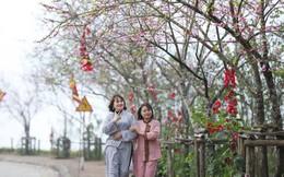 Ngắm hàng trăm gốc đào cùng nở rực rỡ tại Sun World Fansipan Legend