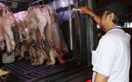 TPHCM: Thịt heo nhiễm thuốc an thần 'vẫn bán đầy ngoài chợ'