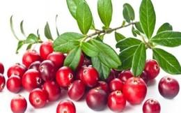 7 loại quả mọng mang đến lợi ích tuyệt vời cho sức khỏe