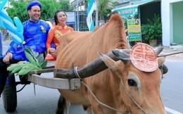 Rể tây rước dâu bằng xe bò
