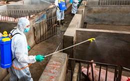 Chuyên gia quốc tế hỗ trợ Việt Nam ứng phó dịch tả lợn châu Phi